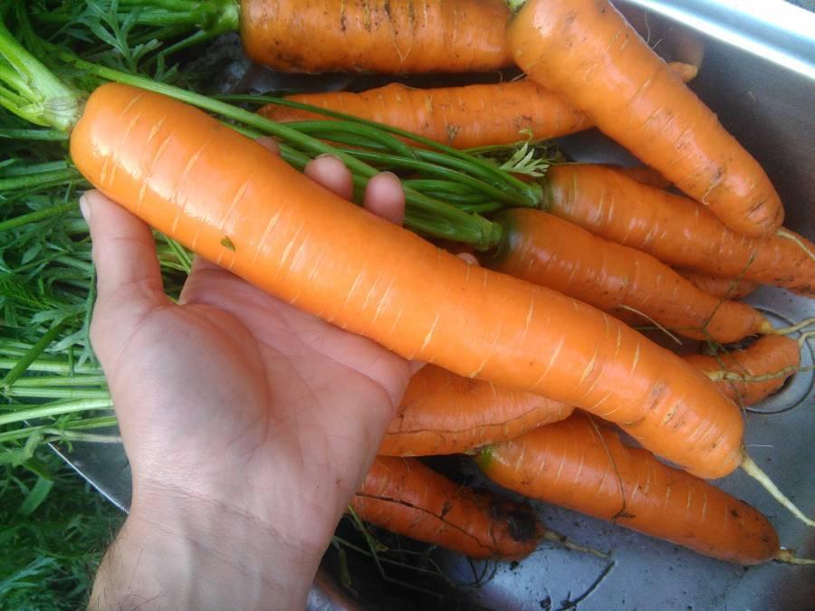 Como Cosechar Las Zanahorias Para ver la película en lenguaje de signos (internacional), se encuentra aquí: como cosechar las zanahorias